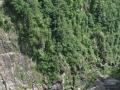 Bosco attorno alla diga in Val Verzasca