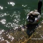 Riflessi nell'acqua del lago