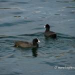 Fauna del lago