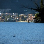 Melide visto da Maroggia