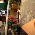 Fiori nel borgo di Santa Maria del Monte