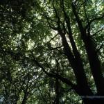 Bosco sulla strada verso l'osservatorio del Campo Dei Fiori