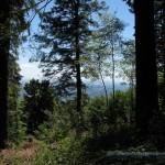 Strada per l'osservatorio del Campo Dei Fiori