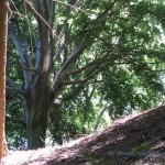 Bosco lungo la strada per il Forte di Orino