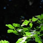 Ape nel bosco