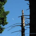 Luna nel bosco